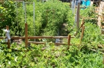 sort of a view of about half the garden. you can clearly see the tomatoes and the melons around the perimeter